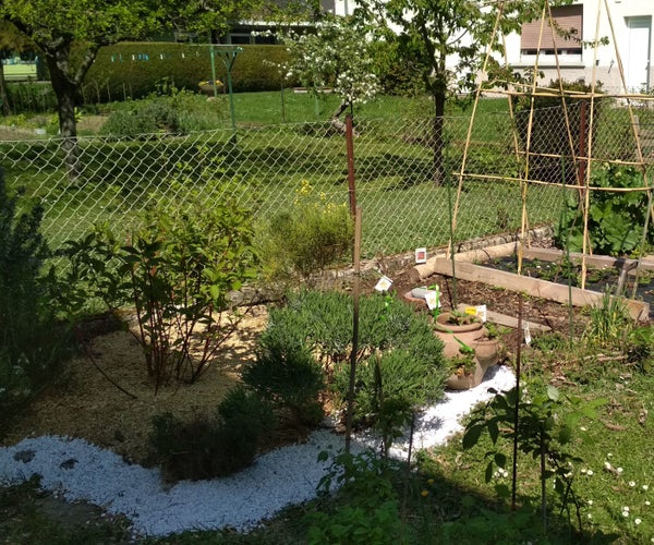 Ollas or Oyas - Ancient Watering System, the Simple Way