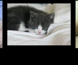 10 Second Shoebox Kitten Bed!