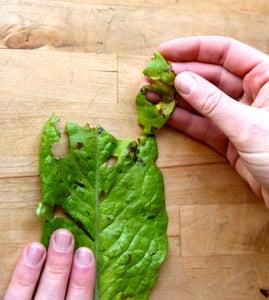 Separate Leaves