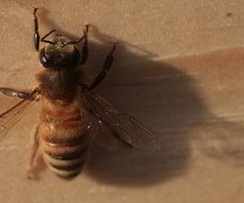 The Beehive Swap