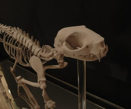 3d Print Cat Skeleton