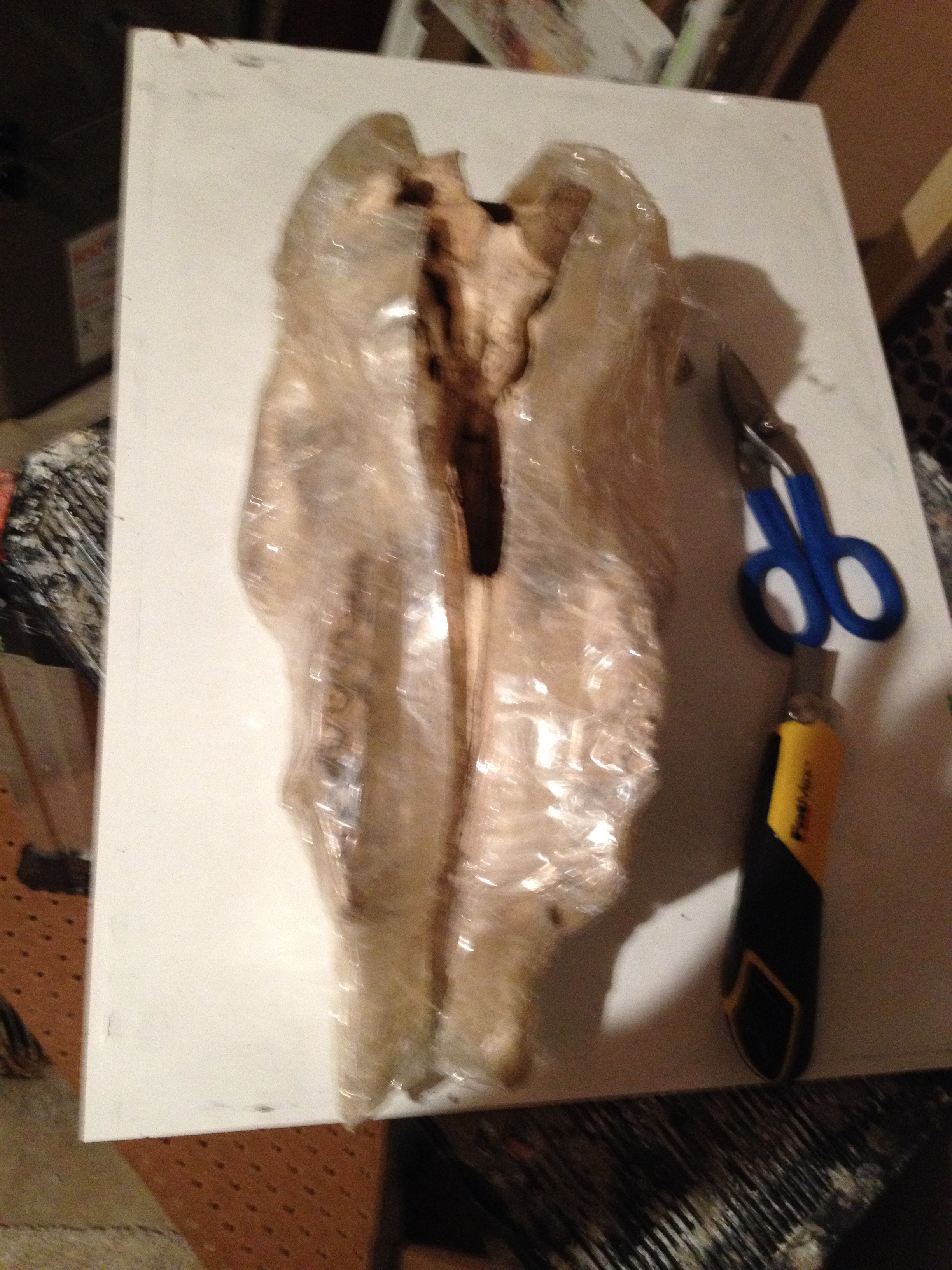 Picture of Cut & Remove Shell