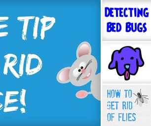 DIY Pest Control   How to Get Rid of Pests Yourself