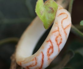 Celtic Knot Bone Ring