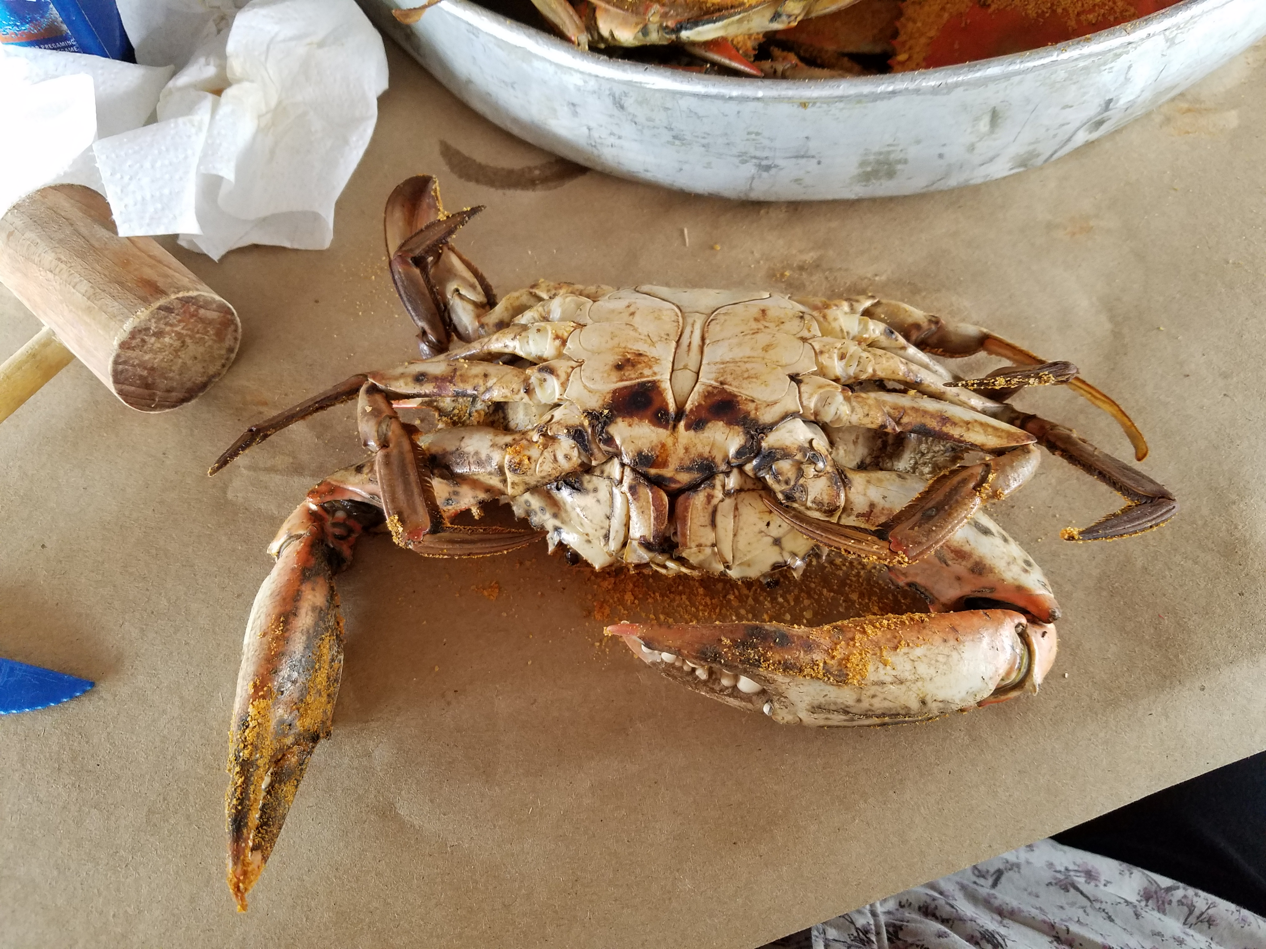 Picture of The Easy Way to Eat Md Blue Crabs