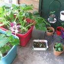 Tetra Hydro Box Garden