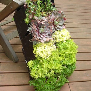 Acclimating Your Vertical Garden