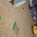 How to Make a Lego Garden
