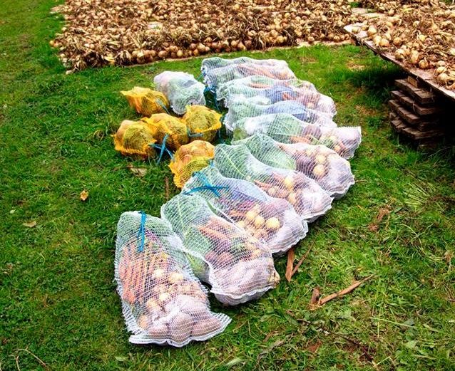 Picture of Grow Ten Tons of Organic Vegetables: Leeks, Onions, Potatoes, Broad Beans, Cabbage, Cauliflower, Sweetcorn, Courgettes & Marrows, Sugar Beet, Beetroot, Carrots, Swede, Kale, Calebrese & Broccoli, Brussel Sprouts, Rhubarb & Strawberries