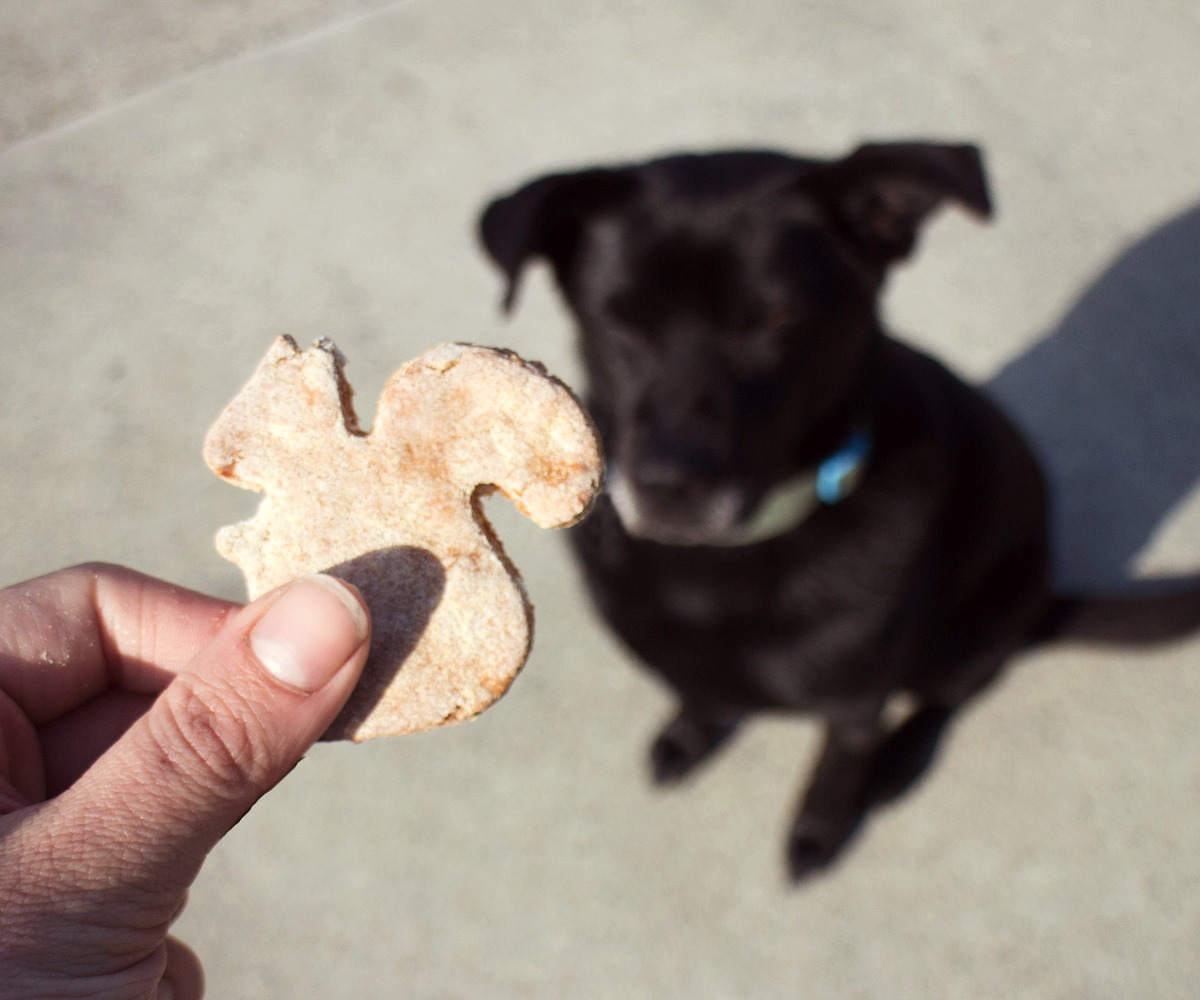 Picture of Gluten-Free Dog Treats