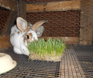 Growing Your Own Rabbit Feed