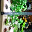 Aquasprouts: Hydroponics Made Easy