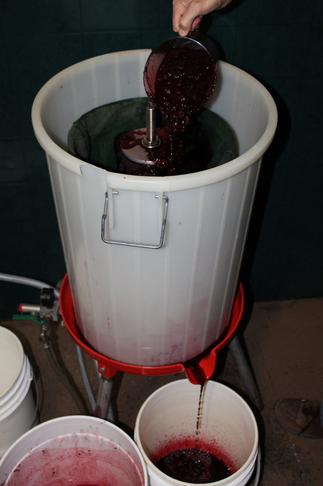 Picture of Pressing the Fruit