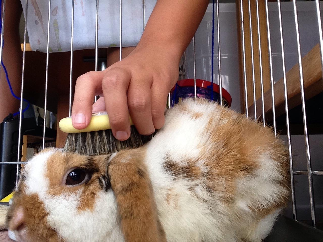 Picture of Brush His Fur