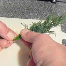Picture of Preparing the Dill