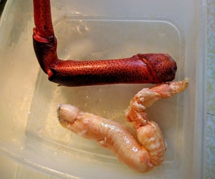 Magic Lobster Leg Meat Extraction