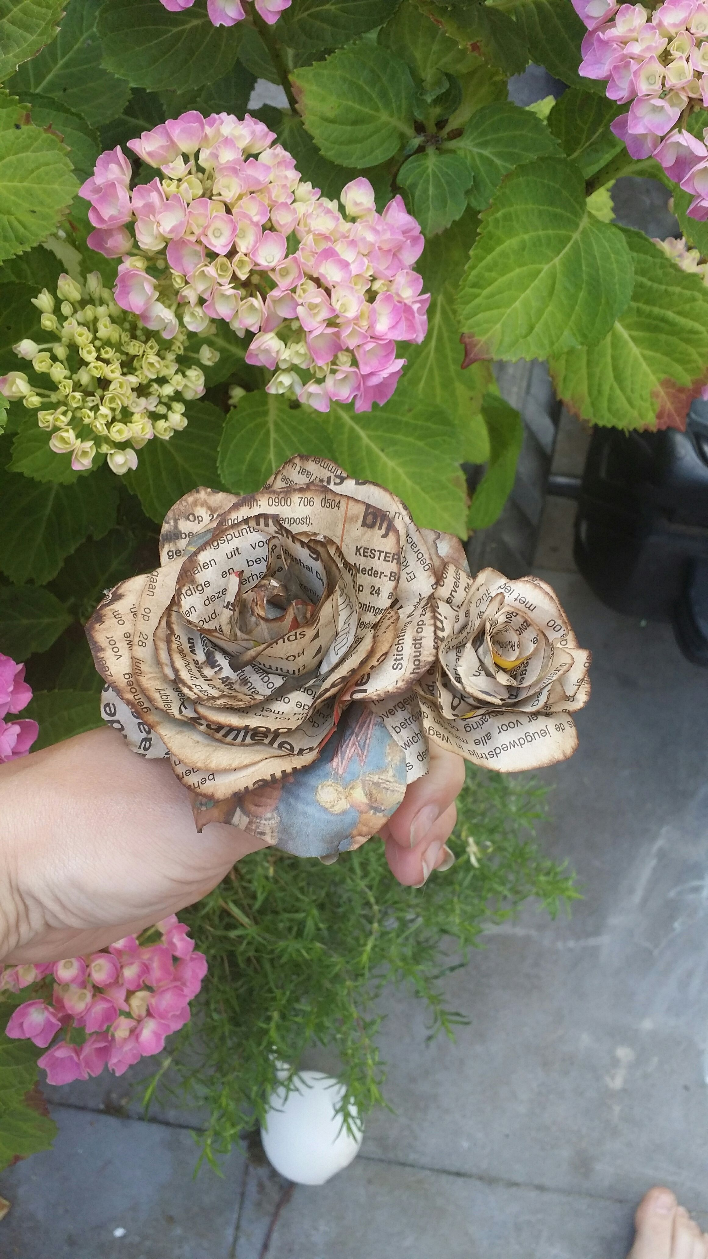 Picture of Newspaper Roses