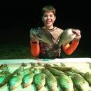White Perch Fishing Guide