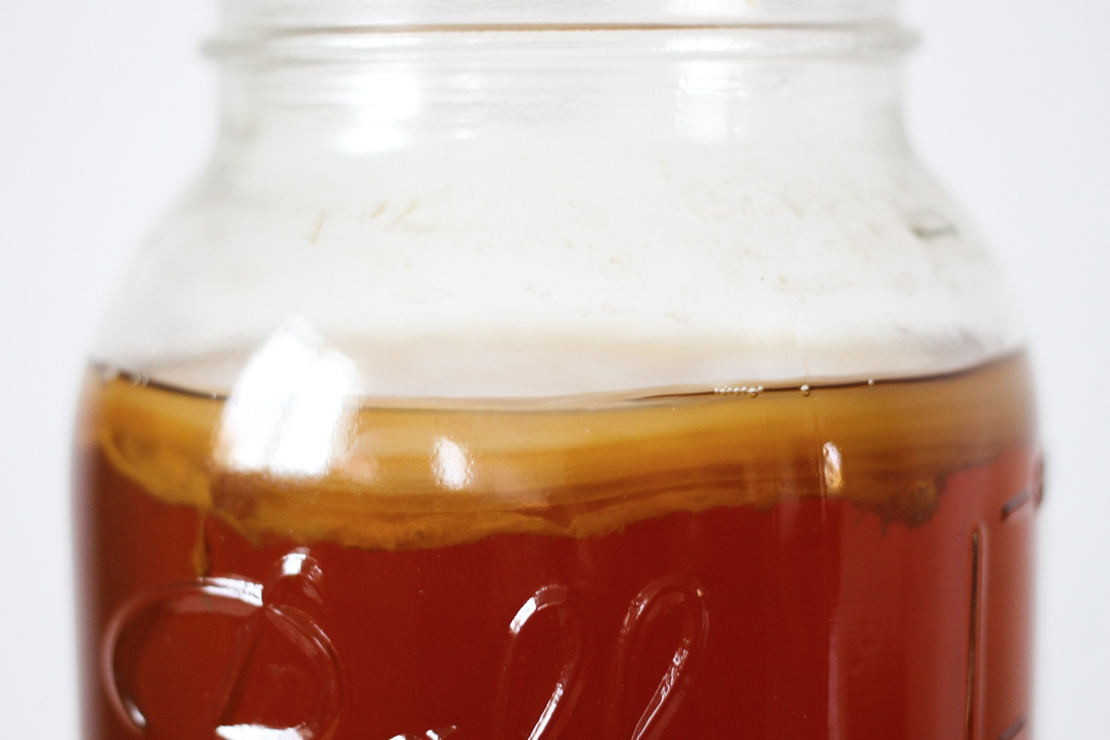 Picture of What to Do With Your Scoby When You're Not Brewing