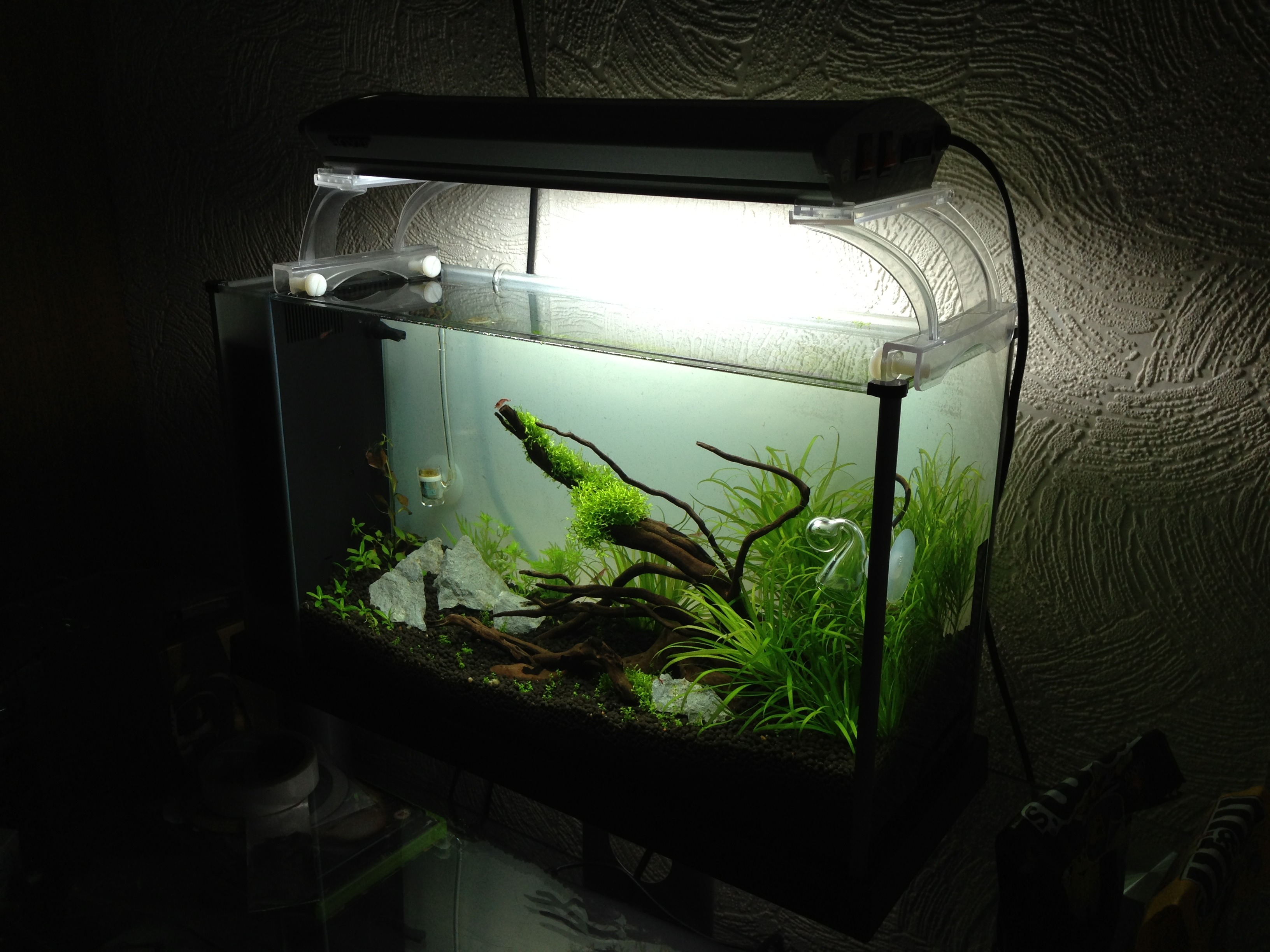 Picture of Home Made Fish Tank Decoration
