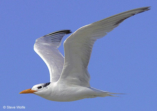 How to Photograph Birds in Flight