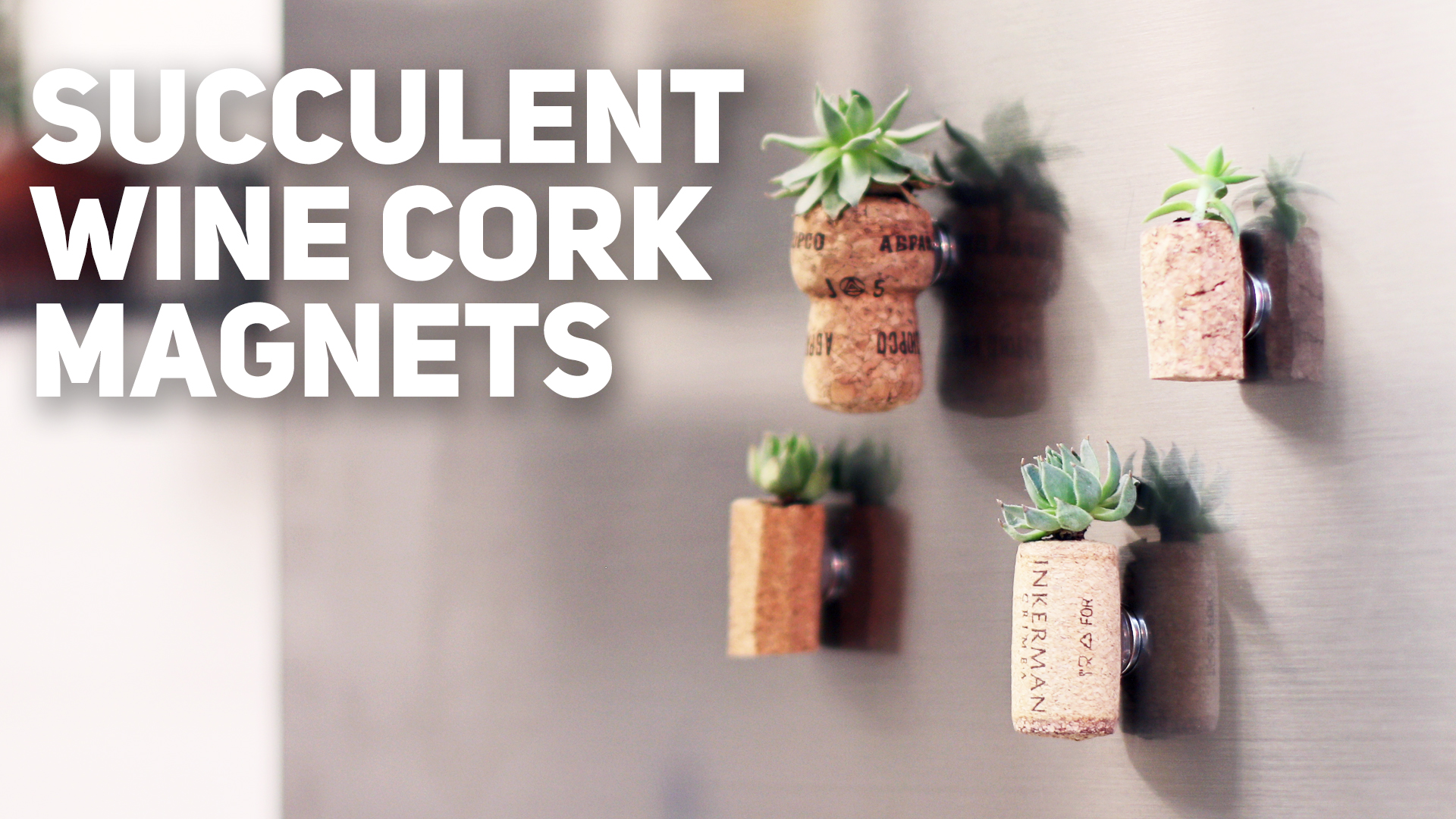Picture of Cork Magnets With Succulent