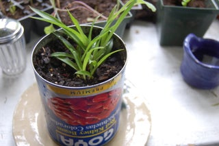How To Make An Indoor Garden 6 Steps Instructables