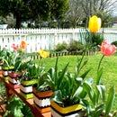 LICORICE ALLSORT PLANT POSTS