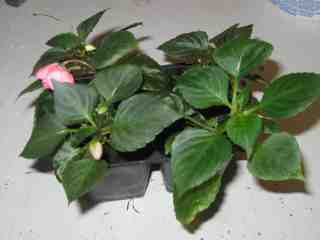 Picture of Take Care of Your Plants.