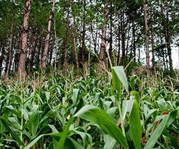 Agroforestry - Integrated Agriculture
