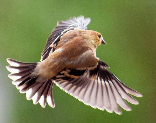 Backyard Bird Photography