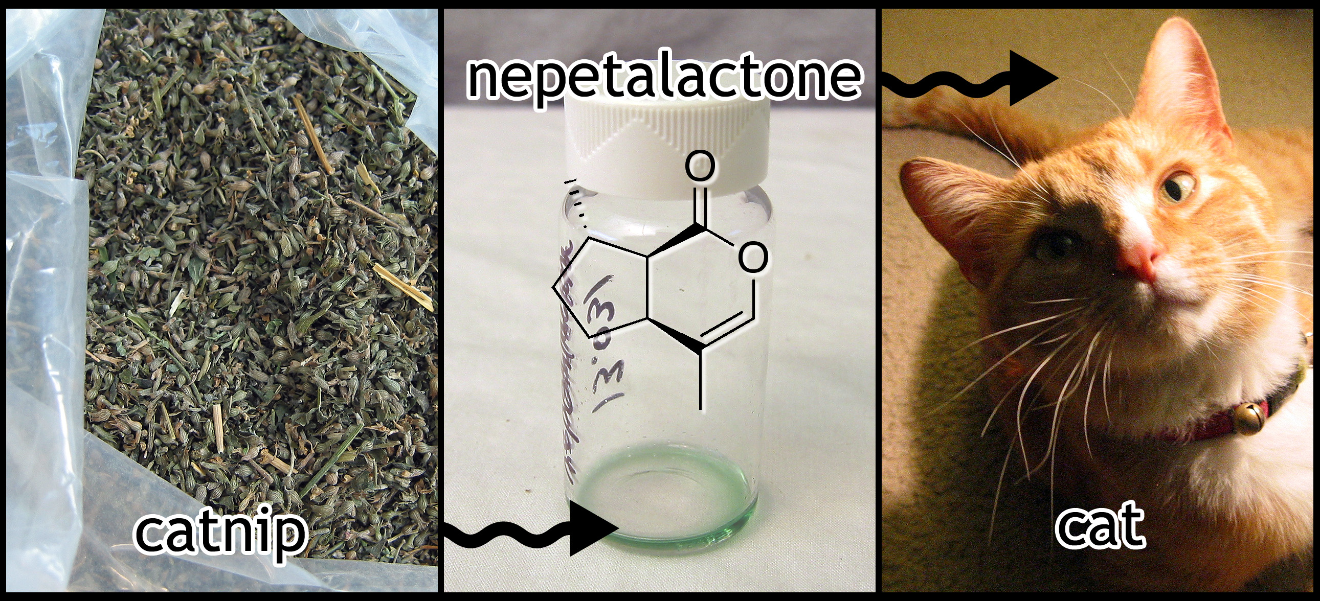 Picture of DIY Kitty Crack:  Ultra-potent Catnip Extract