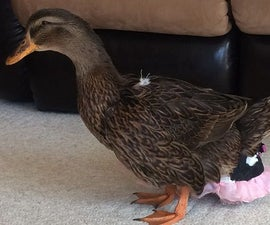 Ducky Diapers