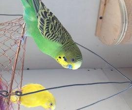 Parakeet Retreat