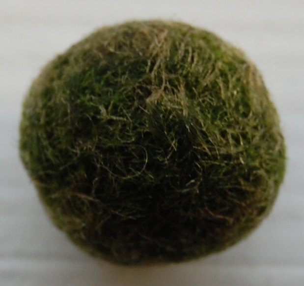 Picture of How to Take Care of Marimo Balls.