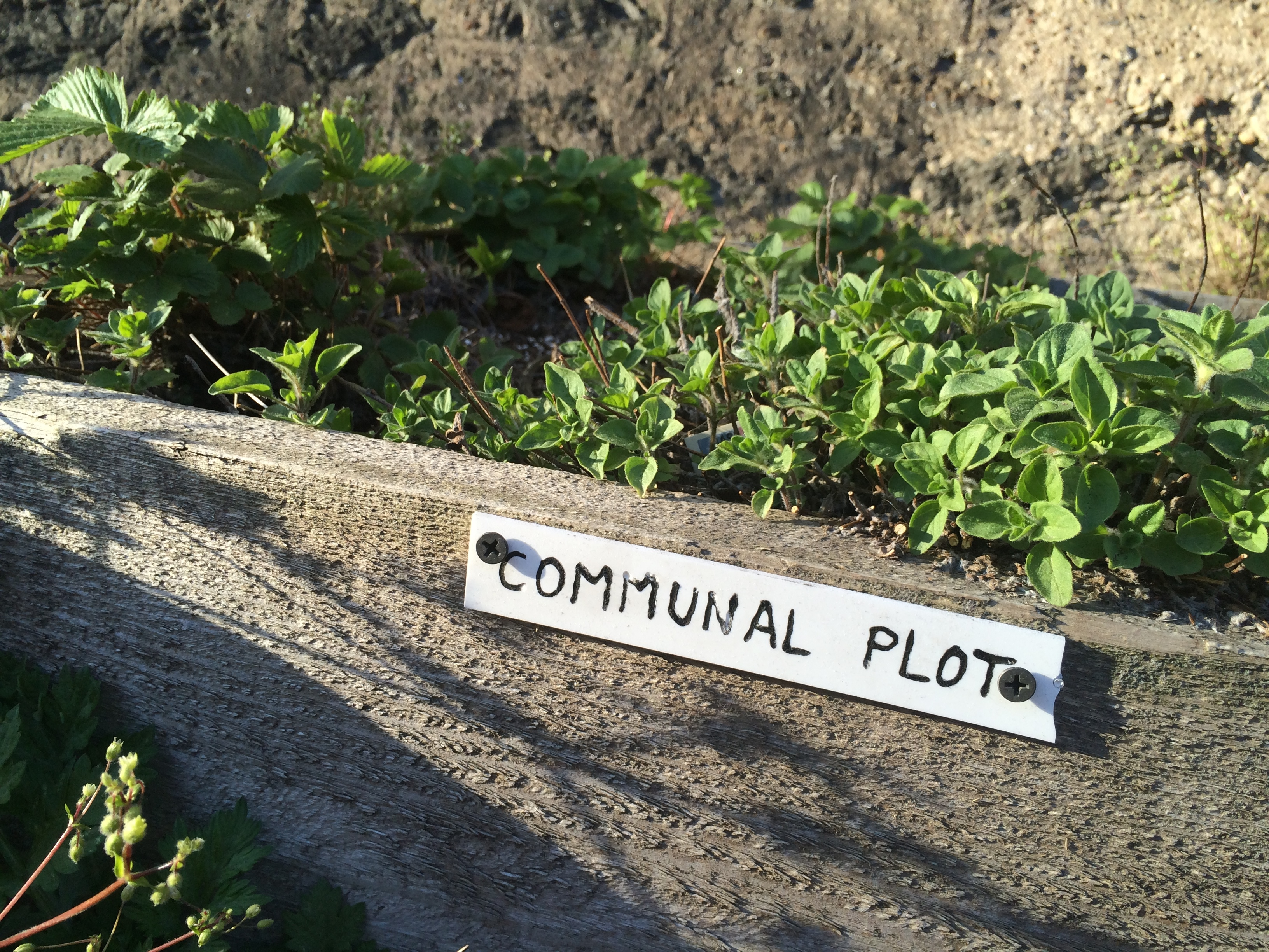 Picture of Build a Community Garden