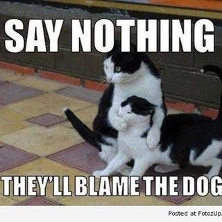 funny-cats-013.jpg