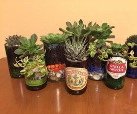 Beer Bottle Succulents