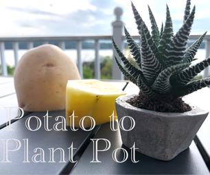 Potato to Plant Pot