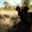 Hound to Hound of the Baskervilles: Pet Photo Edit