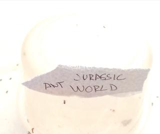 Jurassic Ant World