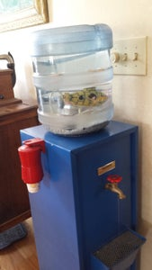 Setting Up Your Fish Tank