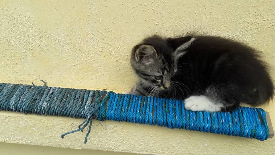 Picture of Portable Cat Scratcher