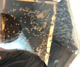 Wooden Observation Beehive ::UPDATED!::