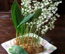 Potato Flower Arranging