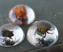 Beetles in Resin Jewelry!