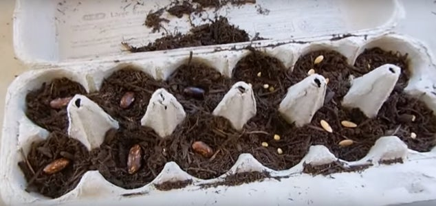Fill Egg Carton With Soil & Seeds