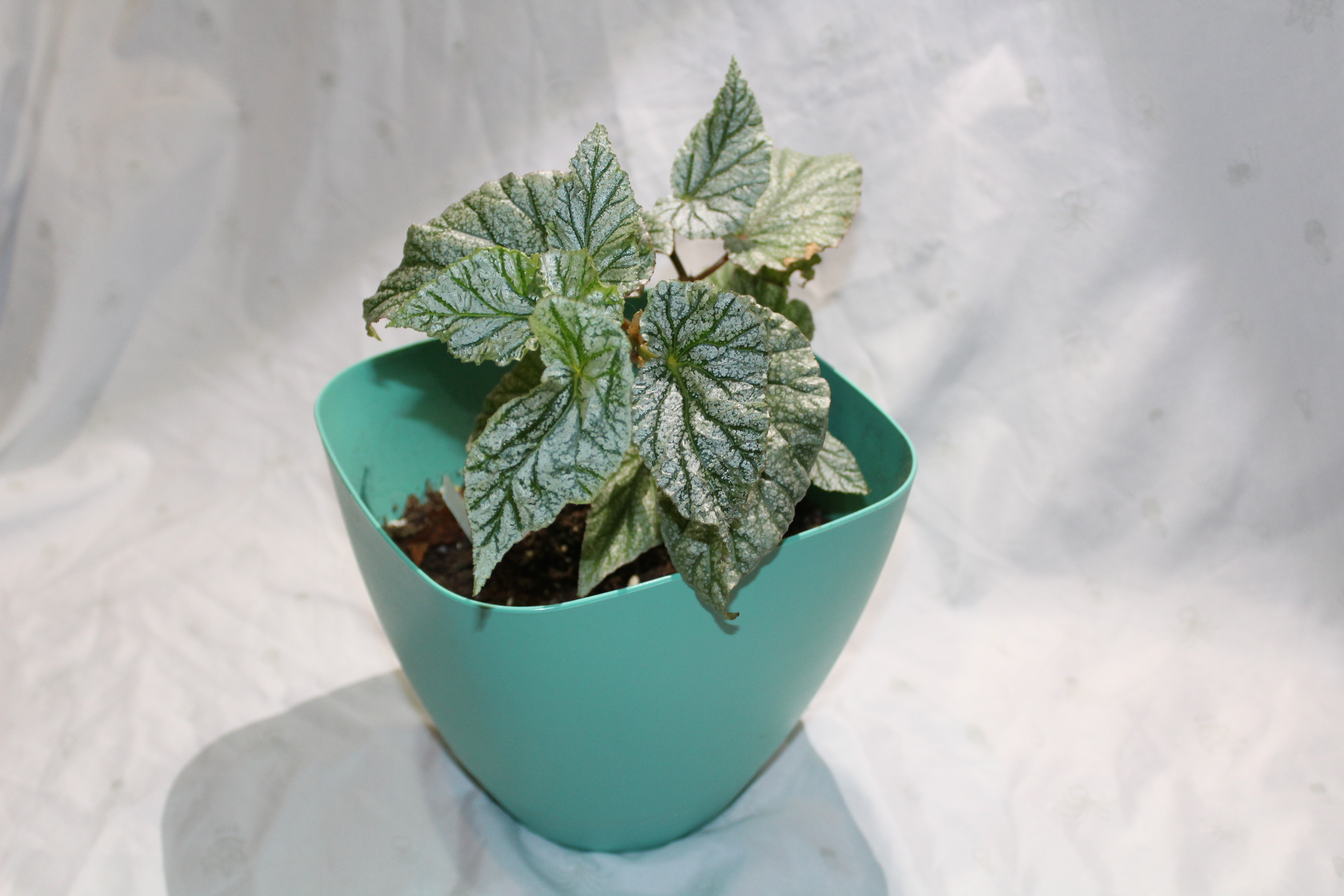 Picture of Potting