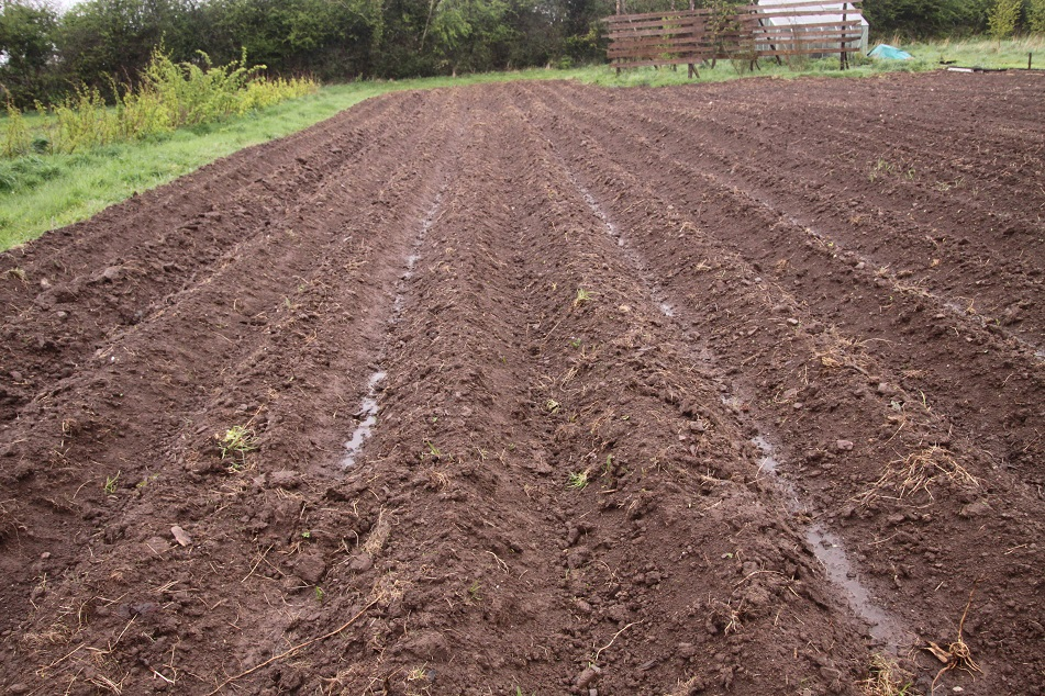 Picture of Ridging Up the Rows of Potatoes