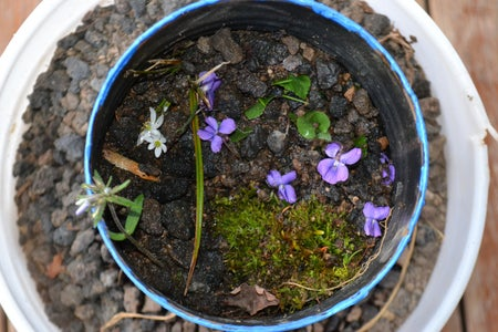 Old Can Flower Pot